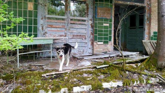 游荡在切尔诺贝利的狗子 是禁区守卫们最好的伙伴